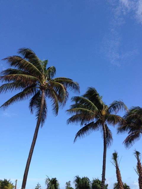 Guilty Pleasure oktober: Palmbomen